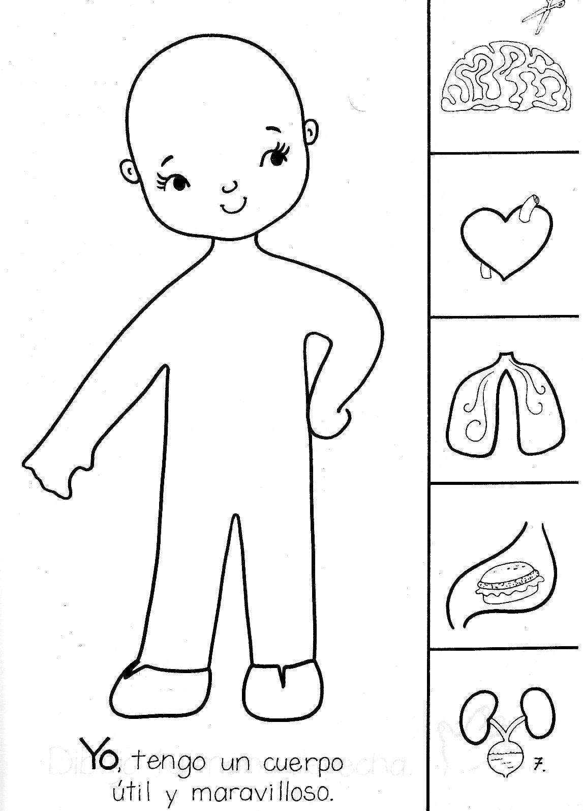 actividades para preescolar el cuerpo humano - Buscar con Google ...