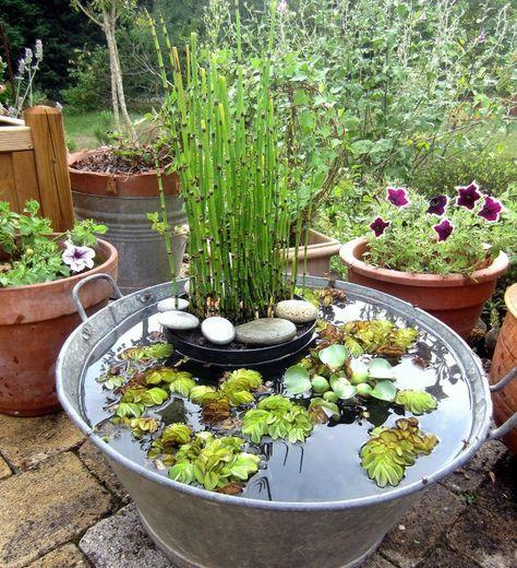 Mon jardin aquatique dans une bassine en zinc ramen e de for Bassin aquatique jardin