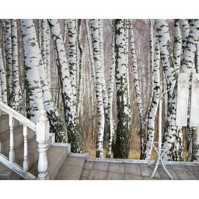 Jp london md9105umbps peel and stick birch trees forest black and white full wall mural at
