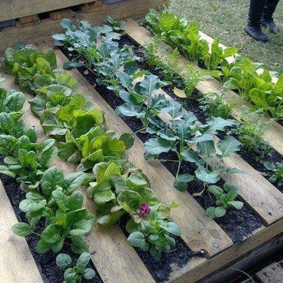 Design Ideas For Vegetable Gardens: 62 Affordable Backyard Vegetable Garden Designs Ideas