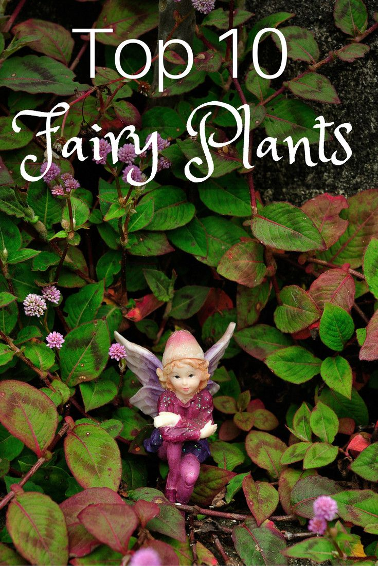 Photo of Top 10 Plants for Fairy Gardens
