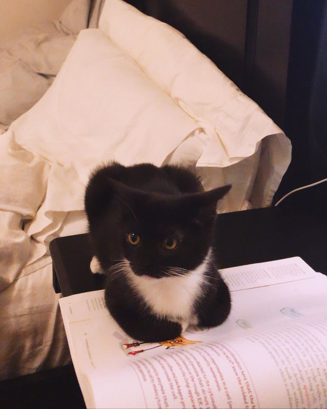 Shes studying for the mCAT with her mom shes going to be a doctor cat