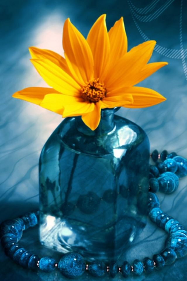 Yellow Orange Flower And Blue Vase Iphone Wallpaper Background Nature Iphone Wallpaper Flower Wallpaper Yellow Flower Wallpaper Fantastic flower vase wallpaper images
