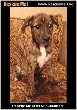Texas Australian Cattle Dog Rescue Adoptions Rescueme Org