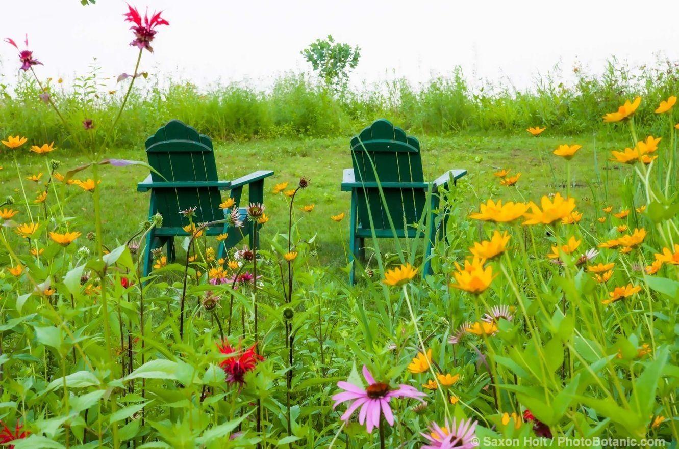 Connecticut meadow garden with native wildflowers; Larry ... on small garden design, wild garden design, cactus garden design, sand design, organic garden design, gravel design, herb garden design,