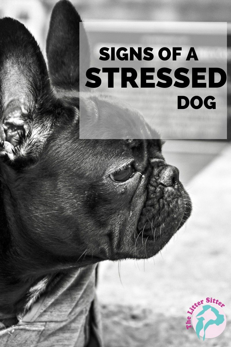 Dog body language chart decoding behavior the whoot