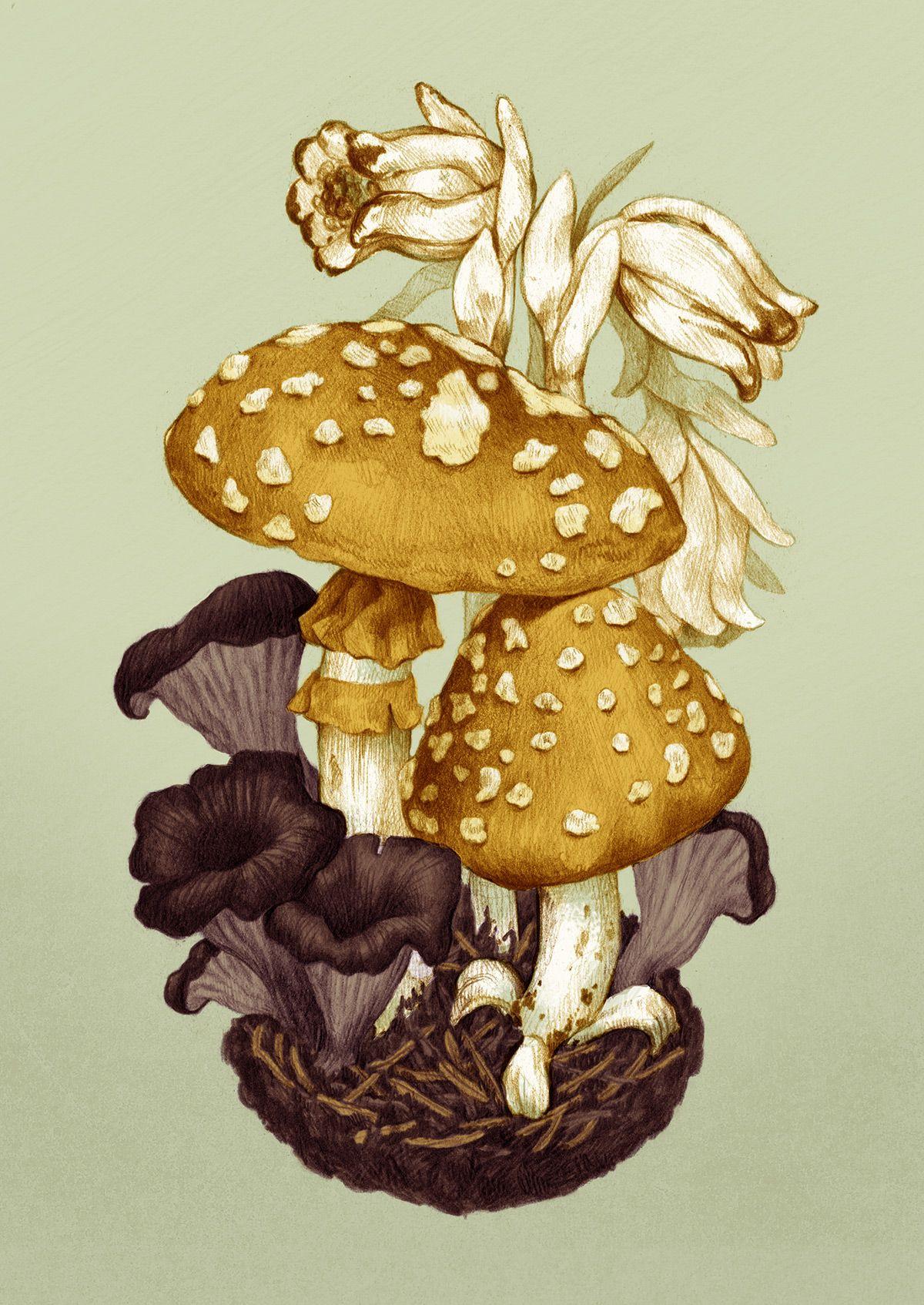 A Series Of Mushroom Illustrations Stuffed Mushrooms Botanical Illustration Mushroom Art