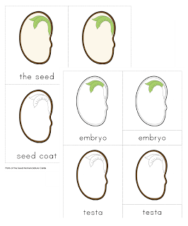 Printables Parts Of A Seed Worksheet 1000 images about unit study seeds on pinterest types of science worksheets and plants