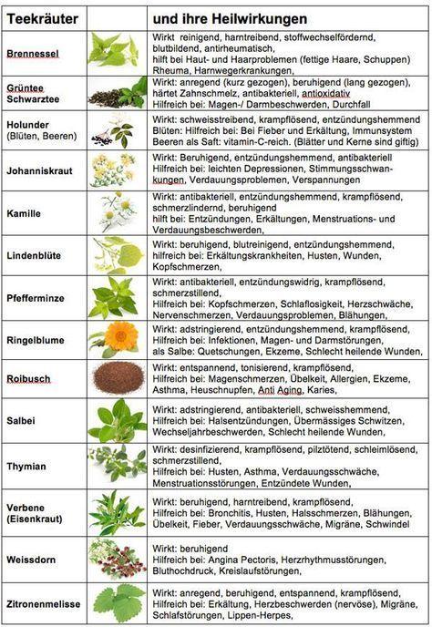 KRÄUTER UND GEWÜRZE (das Kleine A-Z) - DEREN GESCHICHTE UND HEILWIRKUNGEN - OPPT-INFOs - Hintergründe und Materialien #gemüsepflanzen