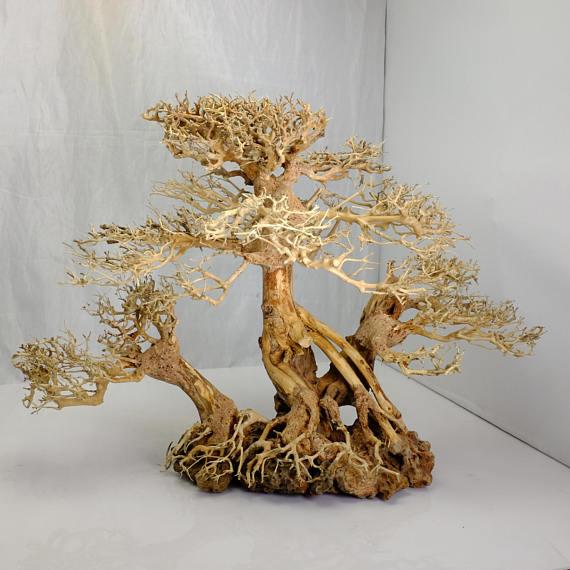 Aquarium moss tree - Bonsai Driftwood on rock - BLS - 12 ...