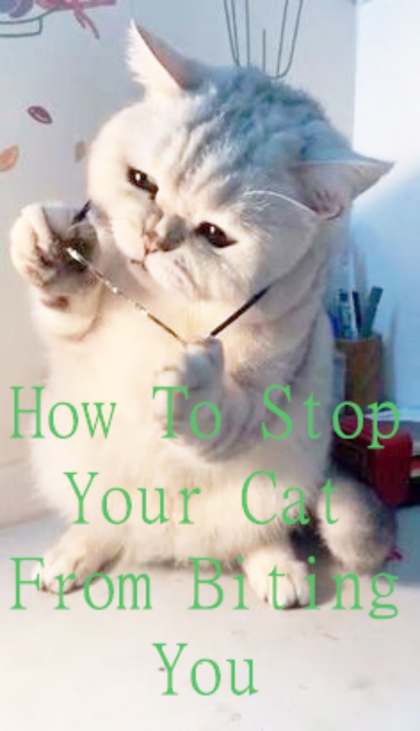 Don T Let Biting Behavior Become A Bad Habit 5 Simple Tips To Stop Your Kitten Biting Cats Bite For Various Reasons We Explain How To Determin In 2020 Cat Biting Cats