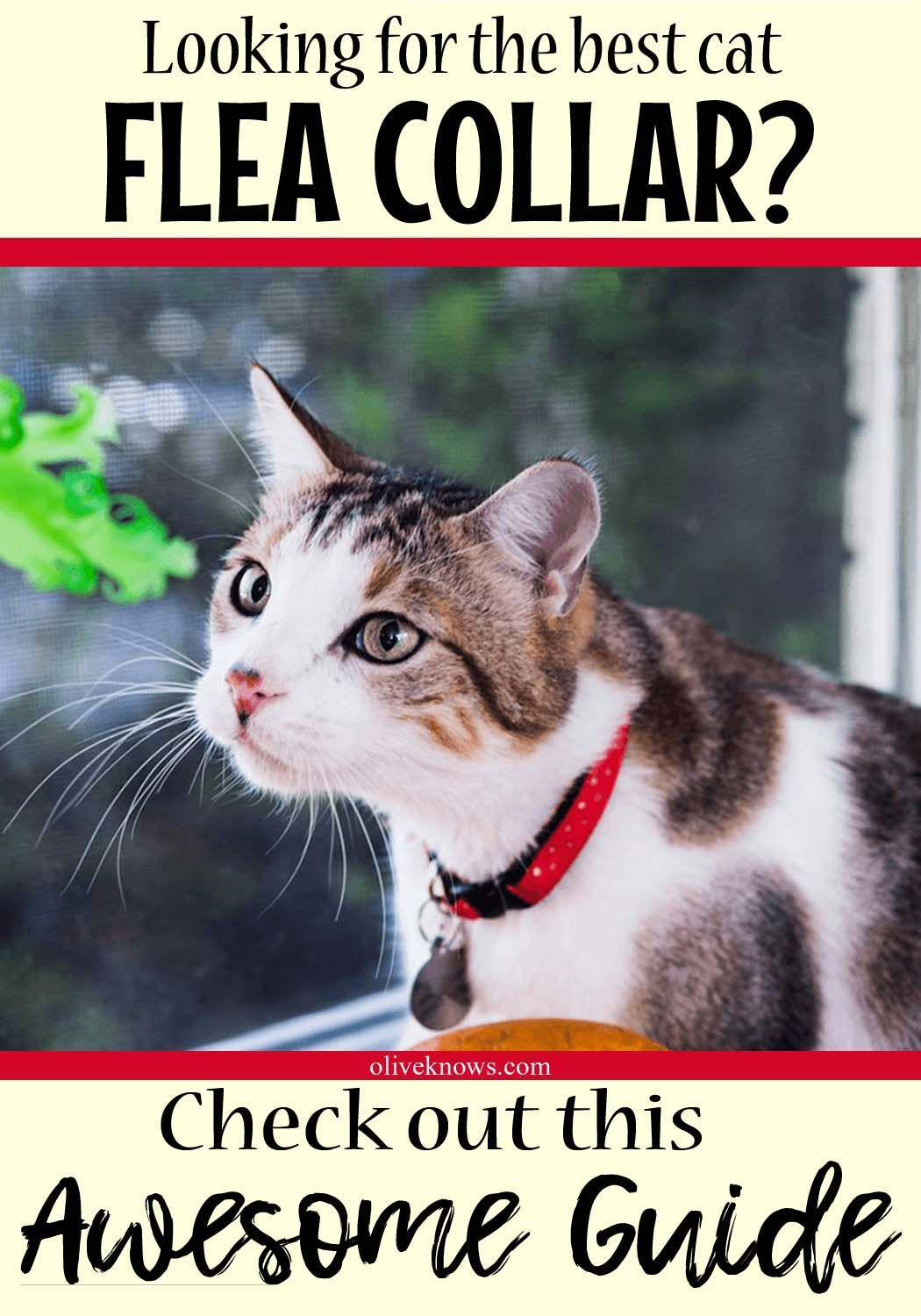 Best Flea Collar For Your Cat Oliveknows Cat Flea Collar Cat Fleas Flea Collar
