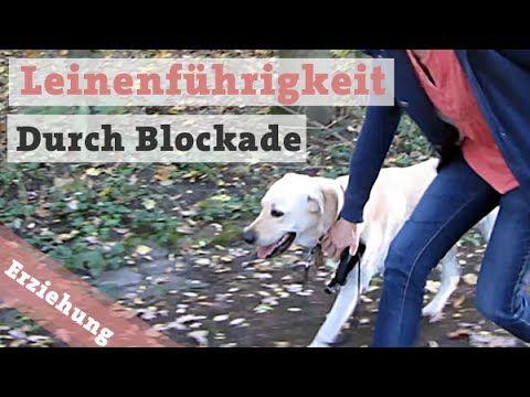 Hundetraining Hundeerziehung Hund Leinenfuhrigkeit Bei Fuss Beibringen Blockieren Youtube Mit Bildern Hundeerziehung