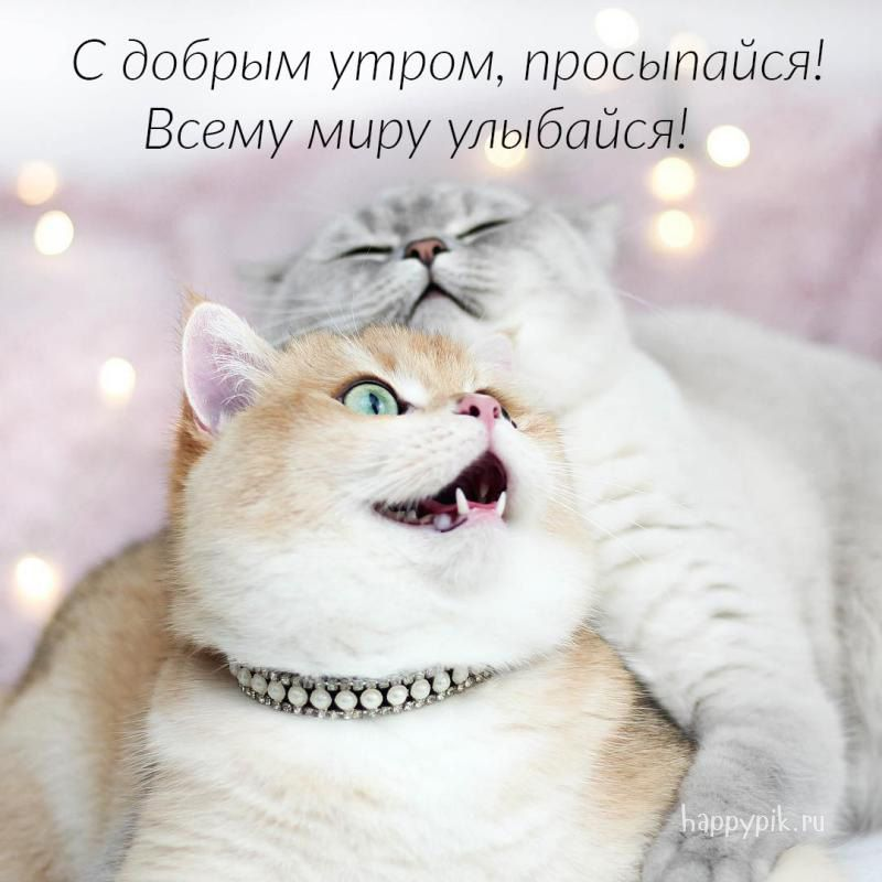 Прикольные картинки с котиками с добрым утром, приколу