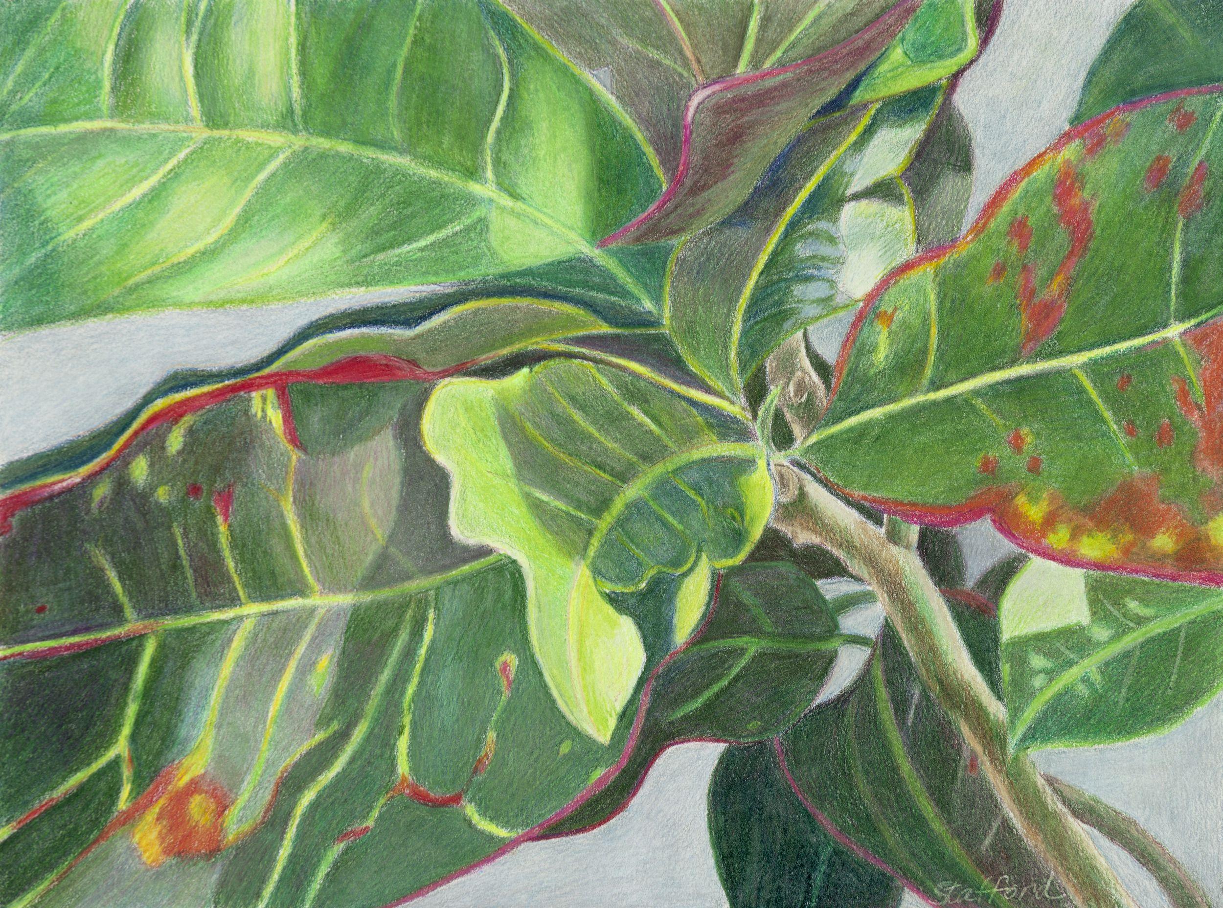"For Sale: Croton Mania by Mary Ann Stafford | $250 | 18""w 14""h | Original Art | http://www.arttwo50.com/buy/art/croton-mania"