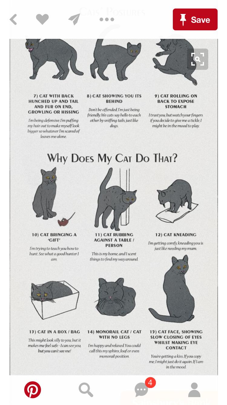 Pin By Trisha Seaton On Mr Kitty Cat Behavior Cat Language Cat Facts