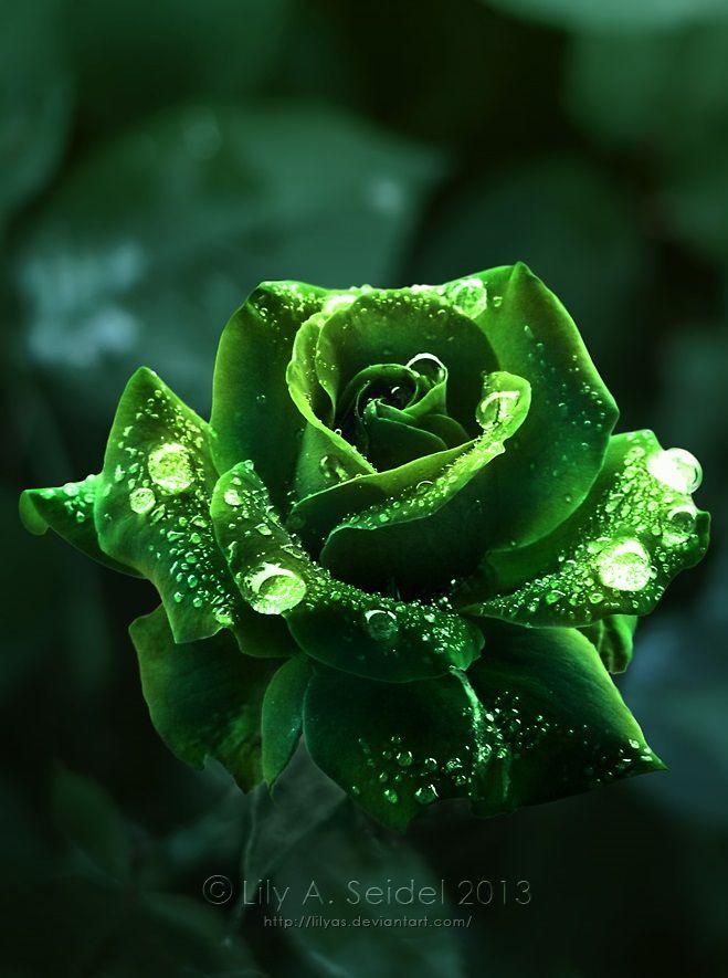красивые фото зеленых цветов добиться отличных результатов