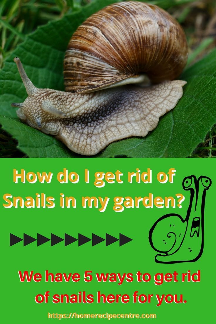 How do i get rid of slugs and snails in my garden