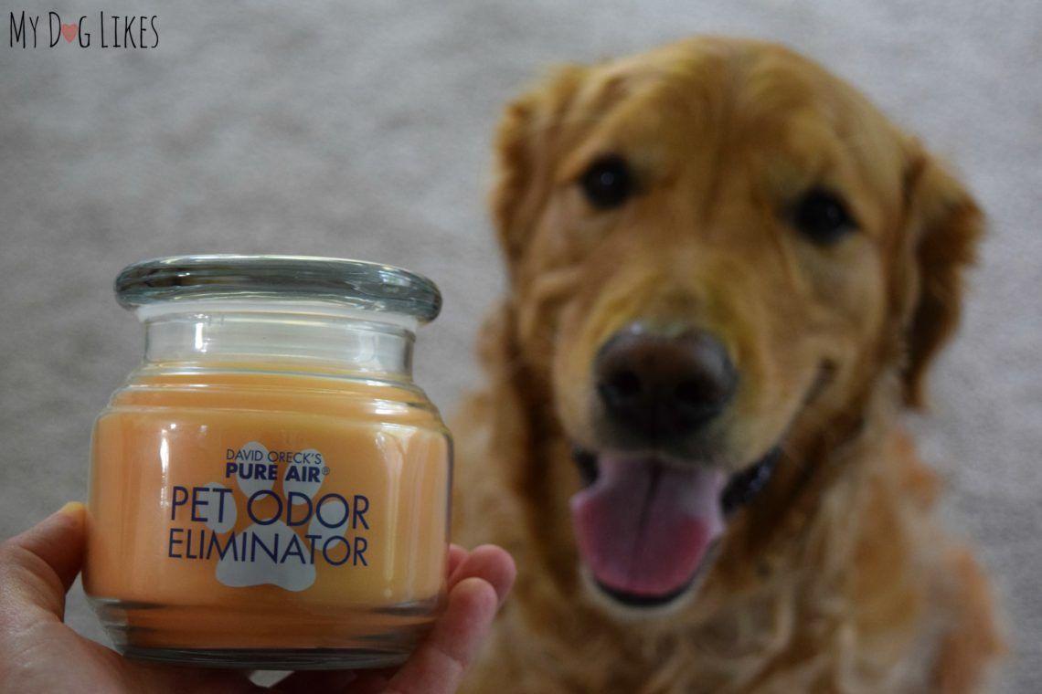 David orecks pure air pet odor eliminator candle review