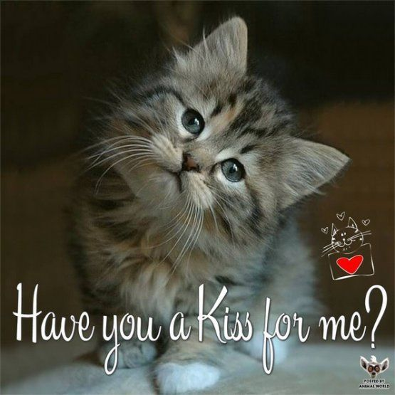Have you a Kiss for me?' - Baby Tabby Kitten | Cat gif, Funny gif, Cat with blue eyes