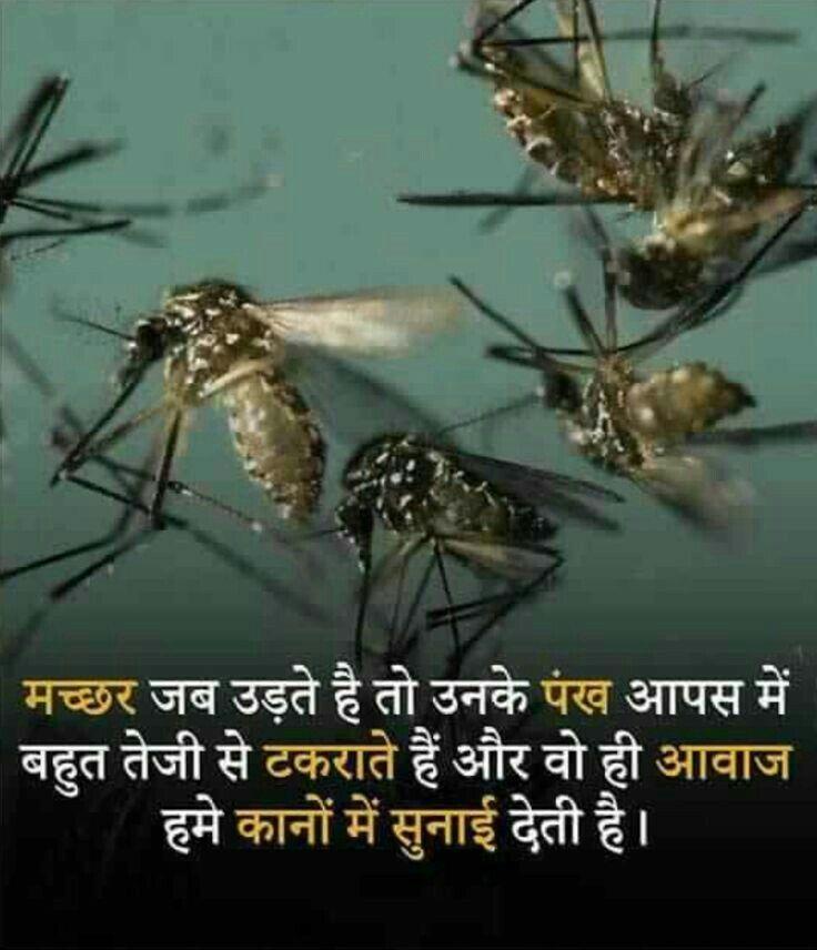 MACHCHHAR   Interesting facts in hindi