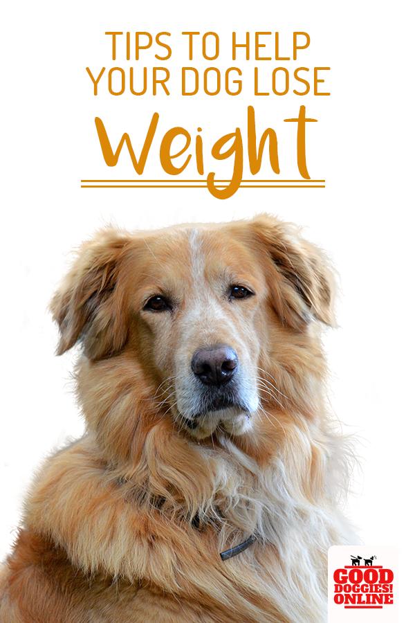 88b5a5bf4f8644a4c6e76db1321bfddc - How To Get My Overweight Dog To Lose Weight