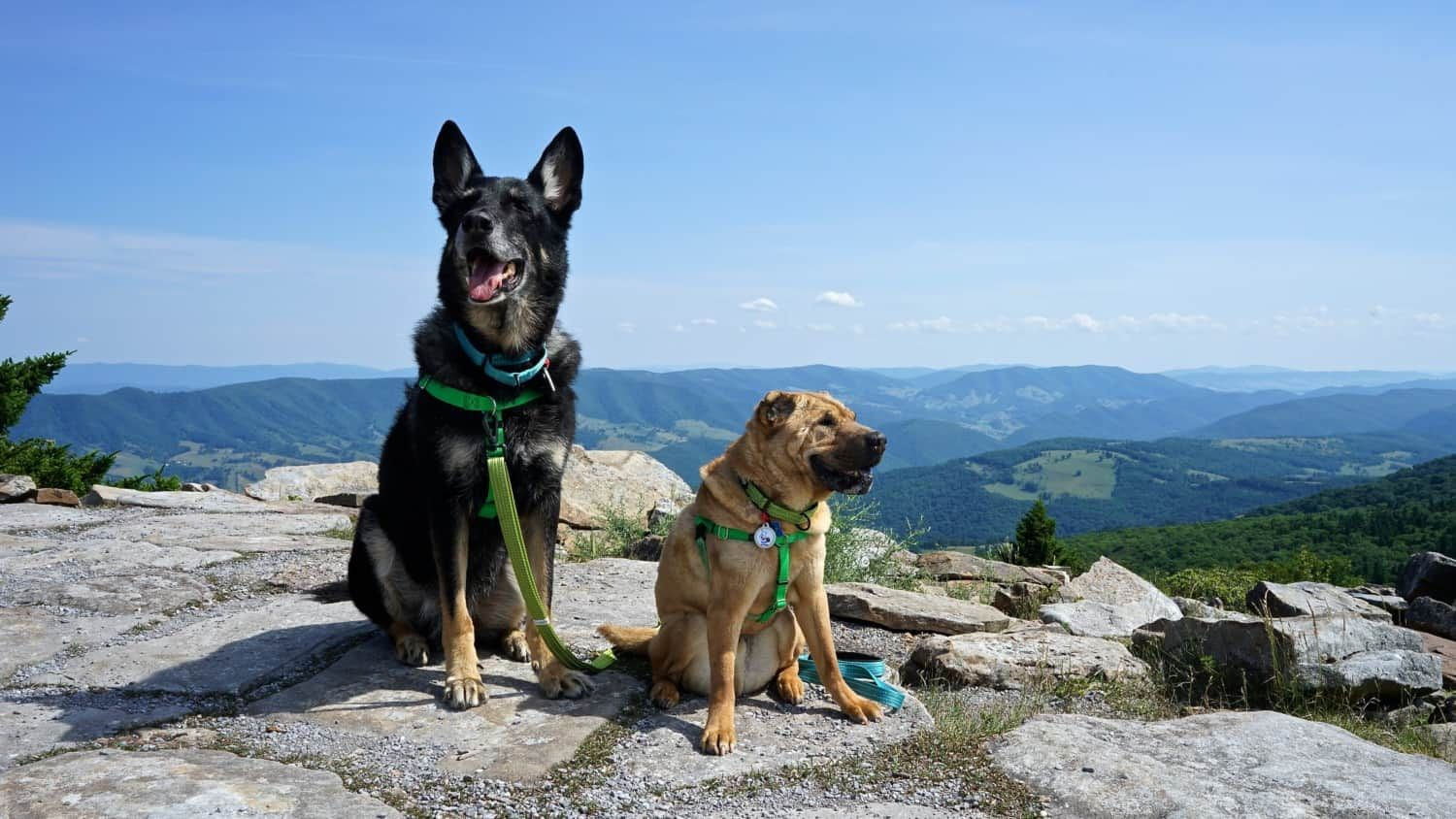 West Virginia's Top Pet Friendly Attraction: The Monongahela National Forest