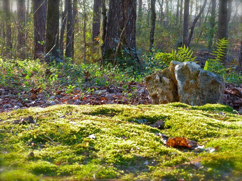 Growing A Moss Path Deb S Garden Deb S Garden Blog Gardening Blog Garden Woodland Garden