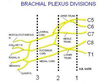 Brachial Plexus Evaluation with MRI: Overview, Evaluation ...