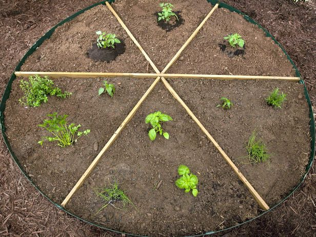 PIZZA GARDEN! grow everything you can put on pizza.