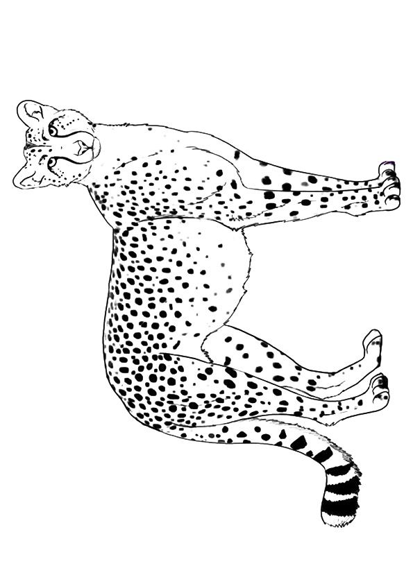 25 Best Cheetah Coloring Pages For Your Little Ones Coloring Pages Color Animal Art