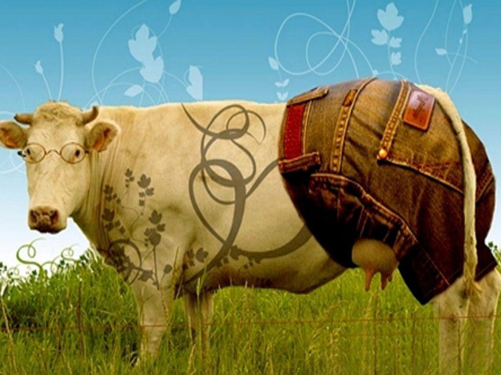 Картинки приколы коров, анимации поздравления музыкальные