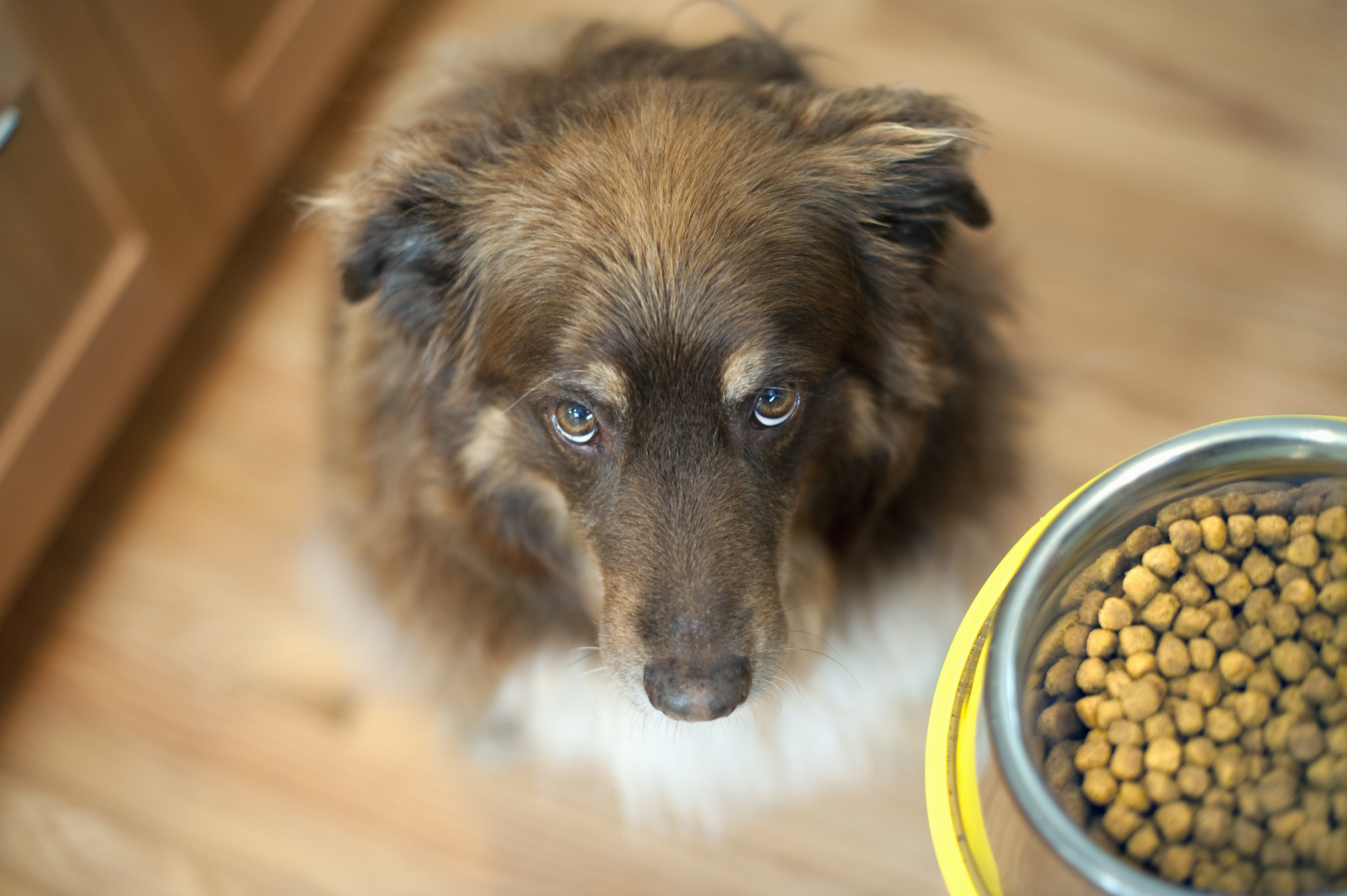 What S The Best Dog Food Here S A Super Simple Guideline And It
