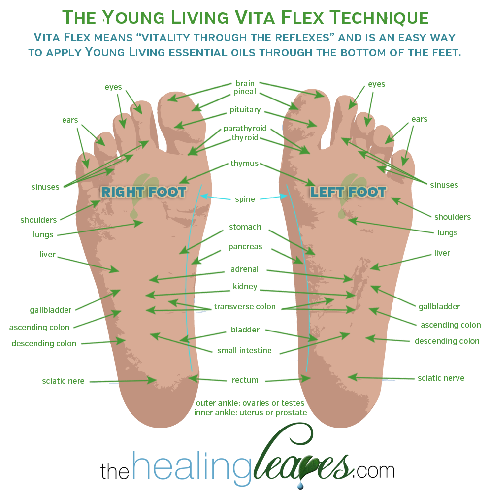What   with the oils on feet here scoop vita flex points and how to use them your young living essential also rh pinterest
