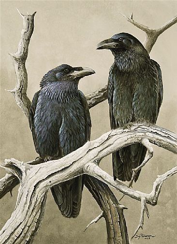 Google Image Result for http://toulousestreet.files.wordpress.com/2009/06/crows.jpg%3Fw%3D460