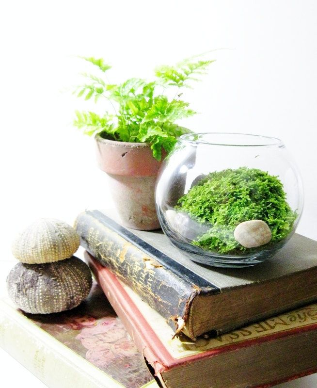 live plant office terrarium: mini indoor desk garden - glass bowl