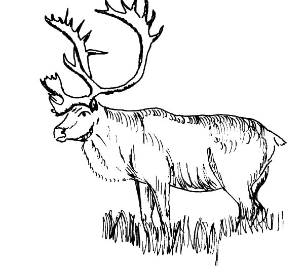 Elk Stepping On Grass Coloring Pages Download Print Online Coloring Pages For Free Colo In 2020 Animal Coloring Pages Zoo Animal Coloring Pages Cat Coloring Page
