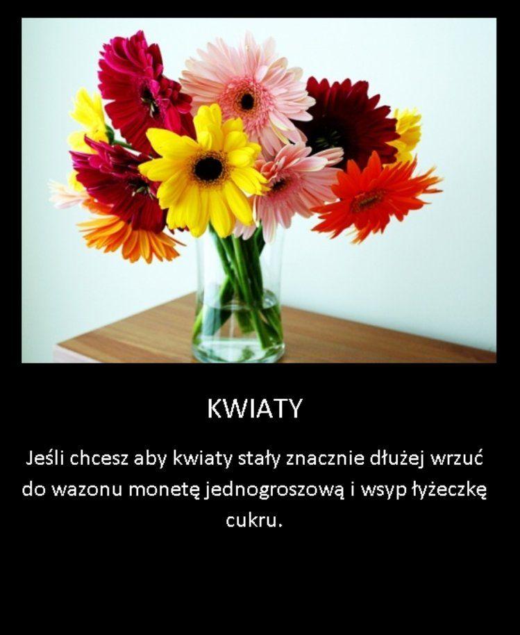 Sposob Na Dlugo Stojace Kwiaty W Wazonie Beautiful Flowers Pictures Beautiful Flowers Images Beautiful Flowers