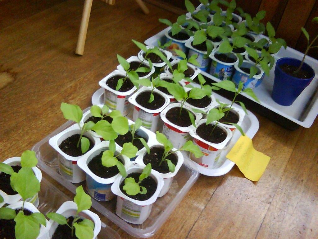 formas de hacer semilleros reciclados