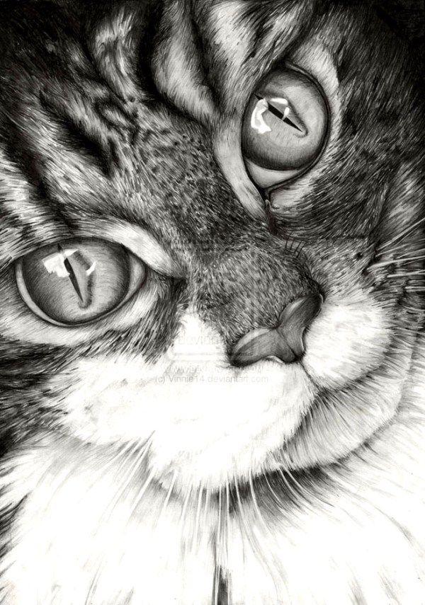 12-realistic-cat-drawing                                                                                                                                                                                 Más