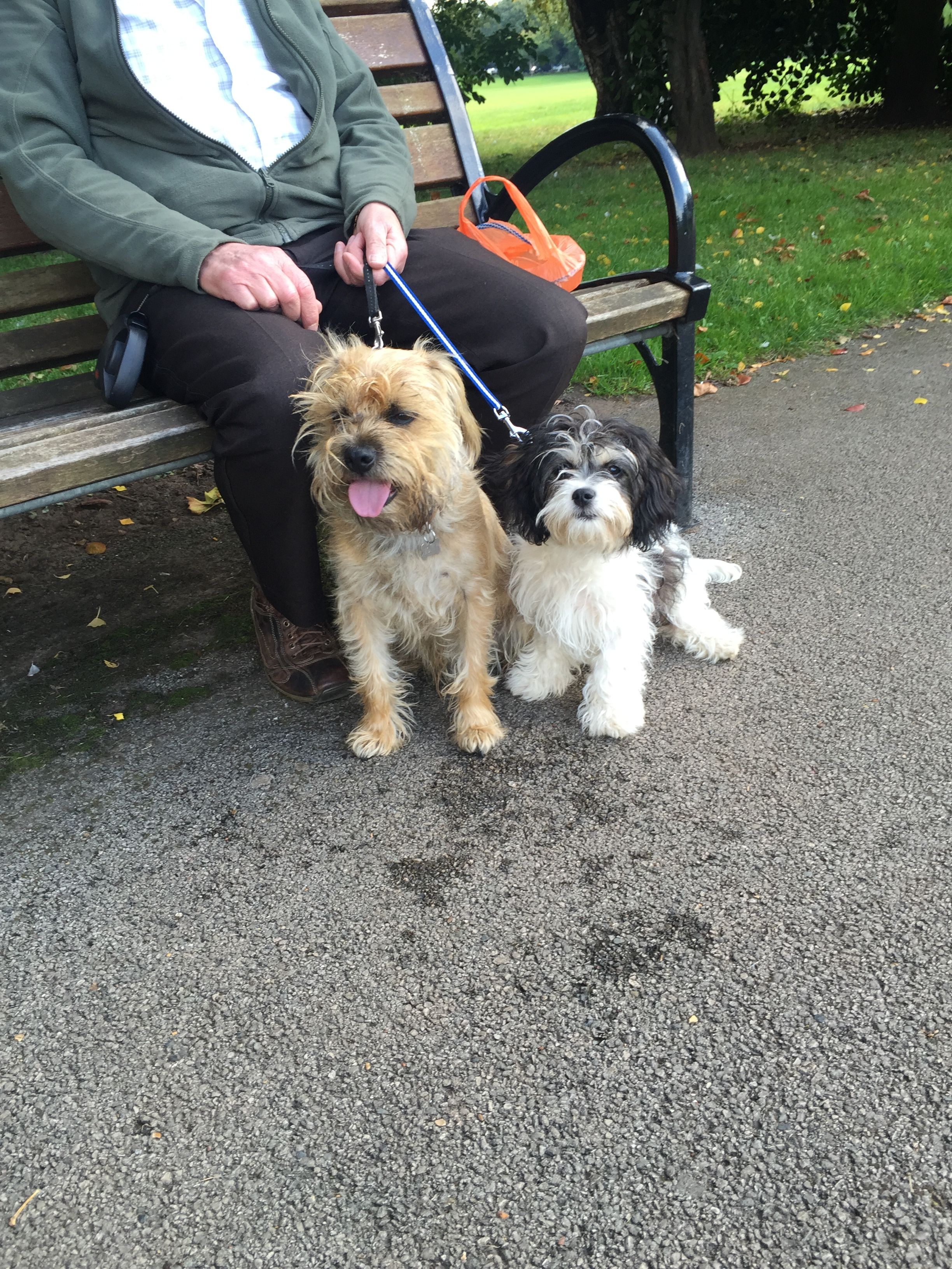 Monty The Border Terrier And Tiff A Cavachon Best Friends Cavachon Dog Cavachon Cute Animals