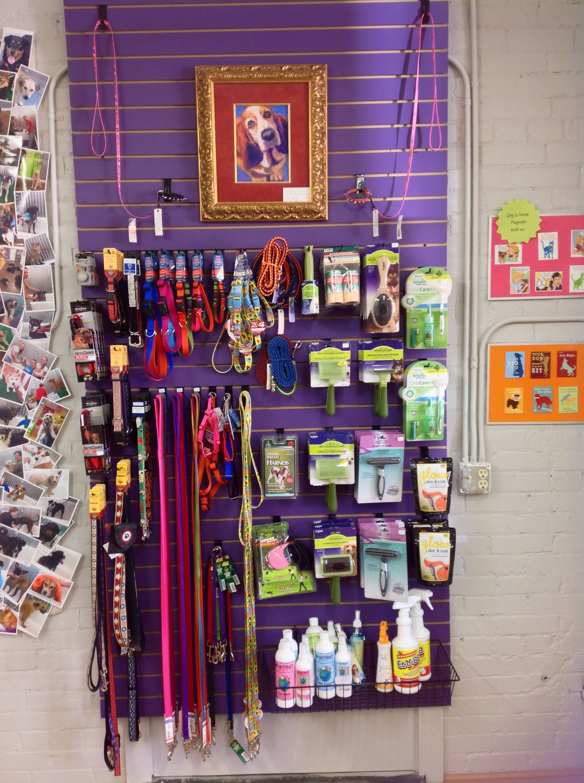 Pin by cosmic dog on cosmic dog loveland co pinterest cosmic cosmic dog offers self serve dog washes homemade treats toys food local art and unique gift items solutioingenieria Gallery