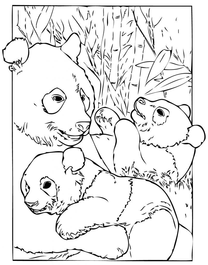 Panda Coloring Pages Panda coloring pages, Bear coloring