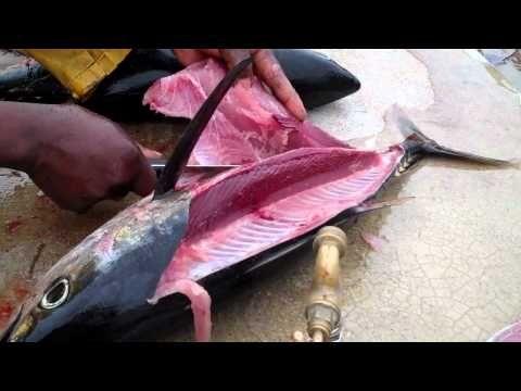 How To Fillet Fish - Yellowfin Tuna & Bigeye Tuna - YouTube ...