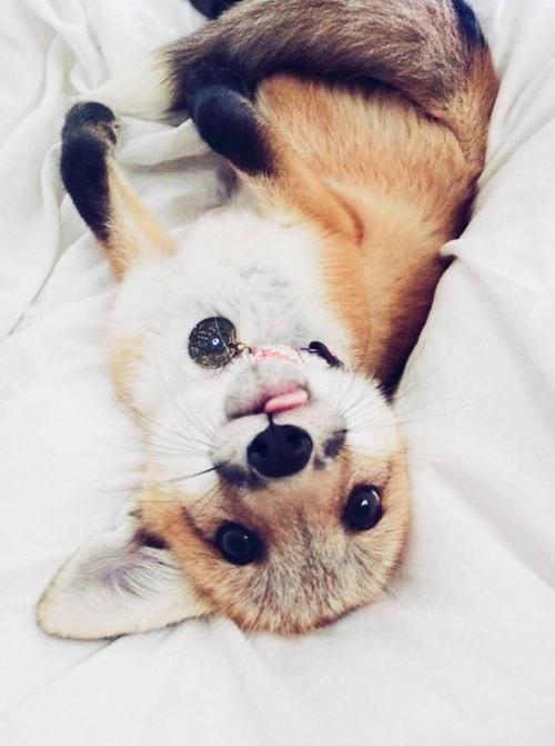 cute dog | Tumblr | I Heart Dogs | Cute animals, Pet fox
