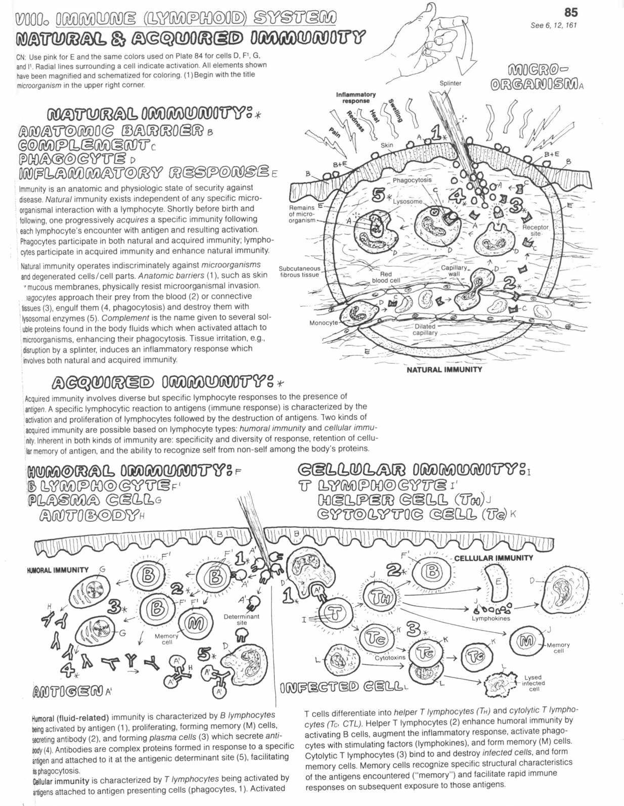 5th Grade Cell Worksheets Printable Worksheets Are A Precious Lecture Room Tool They Now Not In Sim In 2021 Cells Worksheet Biology Worksheet Animal Cells Worksheet [ 1594 x 1234 Pixel ]
