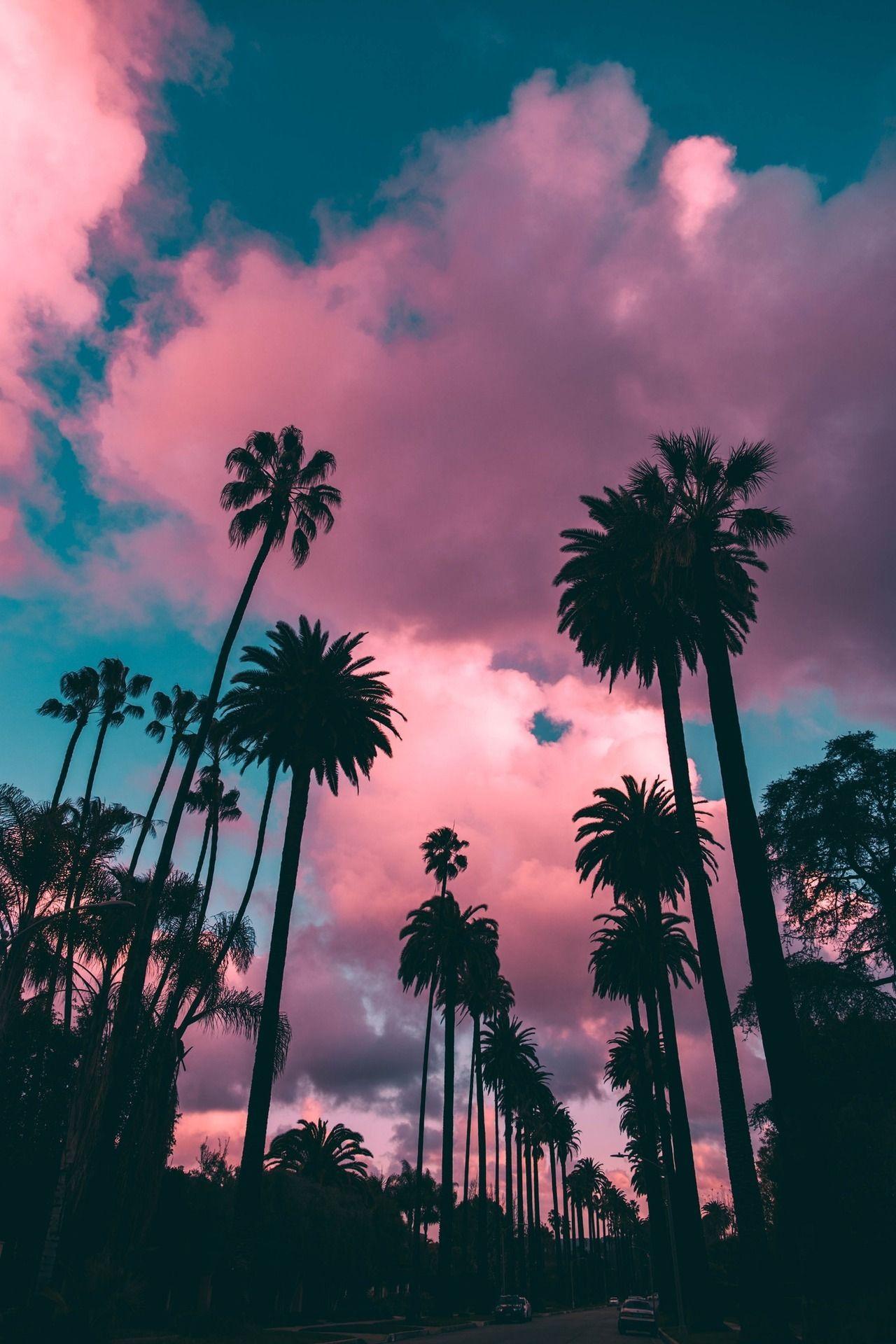 Palm Trees Purple Aesthetic