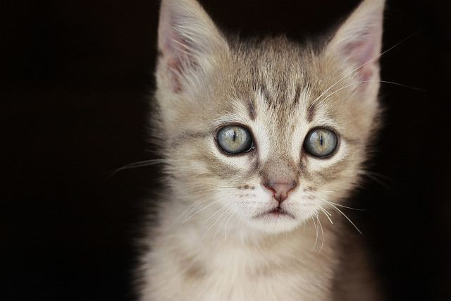Miao!