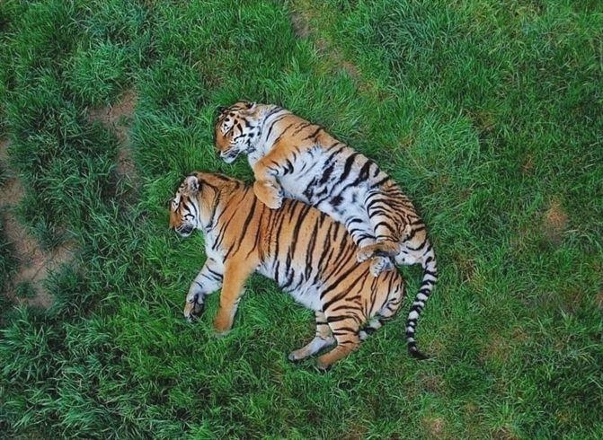 #meme #memes #animal #cat #lol #fun #love #cool #animals #pet #dog #dogs #cats #photooftheday #cute #pets #instagood #animales #cute #nature #animallovers #petstagram #petsagram