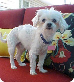 Pin By Diane Litter On Adopt Bichon Frise Pet Adoption Pets